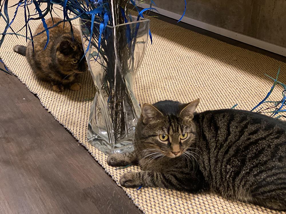 Bürokatzen Mia und Fiona